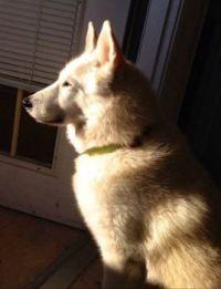 Natasha - my granddaughter's dog - for Andie