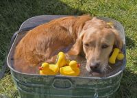 I'm not too sure about those rubber duckies! :)