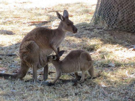 Mom nursing Joey