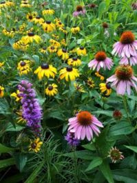 Beautiful July flowers