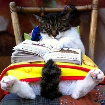 Don't we all fall asleep when we read sometimes?