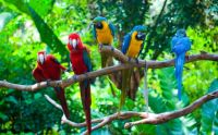 birds-macaw-parrot-green-branches-nice-photo