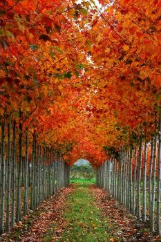 A tunnel of Autumn glory!