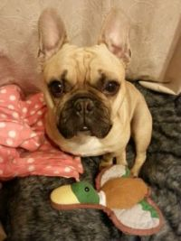 Marcel and his bed duck