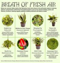 Aircleaning houseplants
