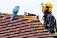 Parrot rescued
