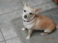 My Daisy Dog
