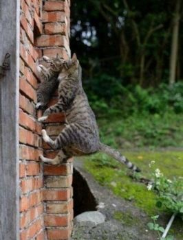 How many times have I told you not to climb up here!