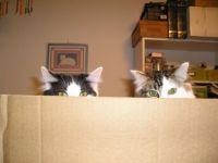 Brandee & Smokie playing peek-a-boo