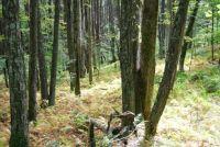 september forest