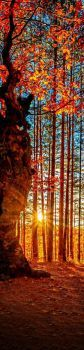 Sunny Autumn...