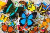 Butterfliy World