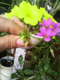 patc  flowers