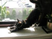 Stretching Cassy