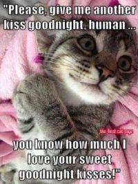 Goodnight ^_^