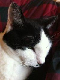 My Dearest Kitty Spot
