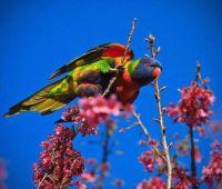Beautiful Birds - No 39