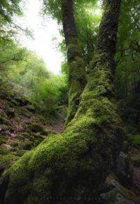 Gorges de la Canche, Morvan, France