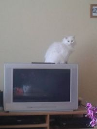 Freya - Believes she should be on TV.