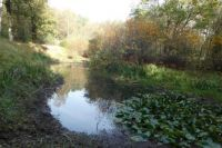 A small, hidden, pond in the woods. On one side are lots of waterlilies.