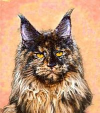 Maine Coon cat art 1