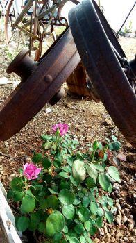 Arizona Springtime