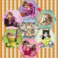 KITTY CAT NURSERY