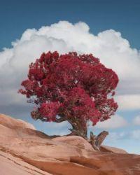 """Red Tree Rocks"""
