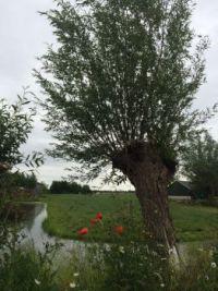 1435 Natuur tussen Waarder en Driebruggen Netherlands