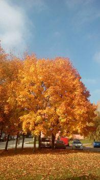 Podzim v Brně