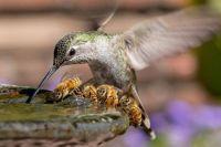 Hummin' and Buzzin' (pic by Toshiyasu Morita)