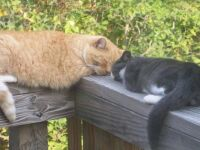 The older cat teaching the younger how to relax.