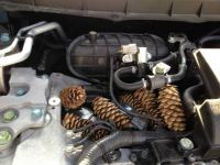 Pine cones in my engine. Thanks to the squirrels