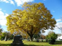Autumn at the Cemetery
