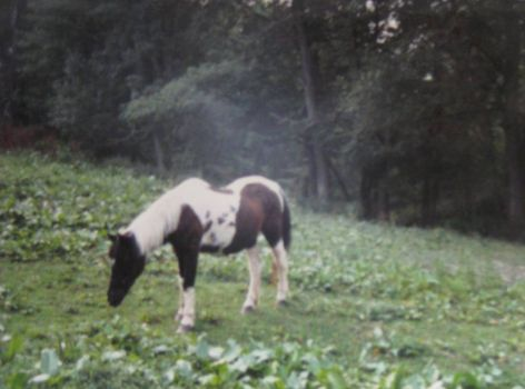 Ghost mist above horse. I took this photo myself.
