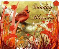 Good Morning - Sunday Blessings