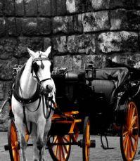 Horse n Carriage