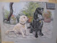 Minik & Sooty, Painting by Pam Schofield