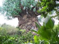 Tree of Life - Disney World