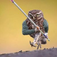 4  ~  The Running Polevault Owl.