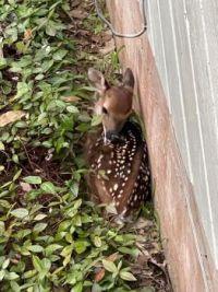 Bambi No. 2