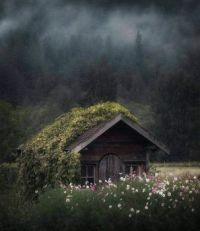 Cabin in the wilderness