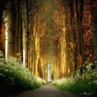 Tree Tunnel In Netherlands-Lars Van de Goor