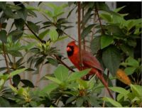 You can count on a Cardinal for color !