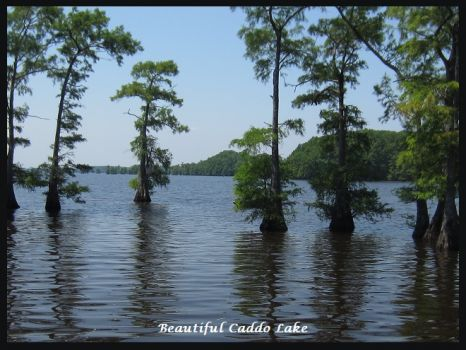 Beautiful Caddo Lake