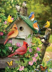 Birds & birdhouse