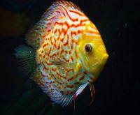 NEON FISH  3 OF 4