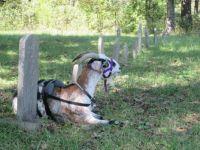 Arkansas Travelers: Cherry Grove Cemetery