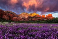 Arizona Wildflowers  by Guy Schmickle