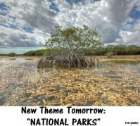 "New Theme Tomorrow:  ""NATIONAL PARKS""   The Everglades, here in Florida.  I've been there several times."